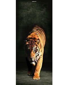 Türplane Tiger